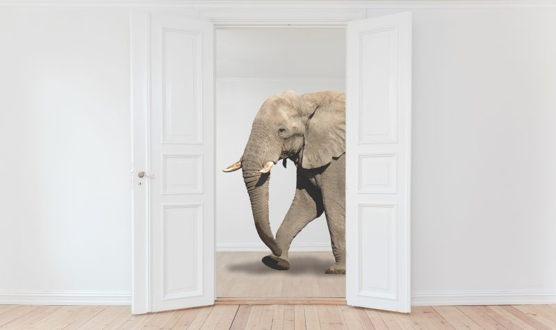 An elephant...in a room!